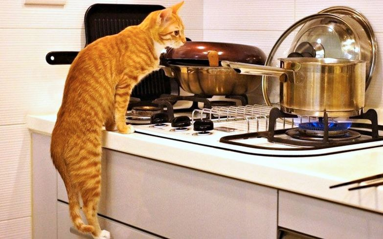 Щипящие, булькающие, шелестящие предметы не останутся без внимания кота