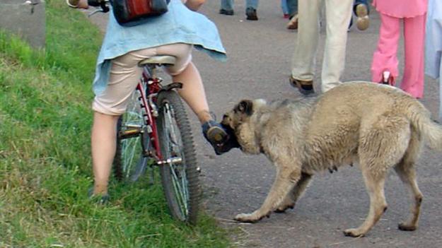 С велосипеда придётся слезть