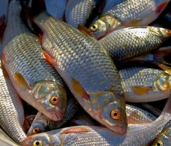 Сырая речная рыба