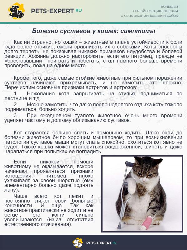 болезни суставов у кошек: симптомы