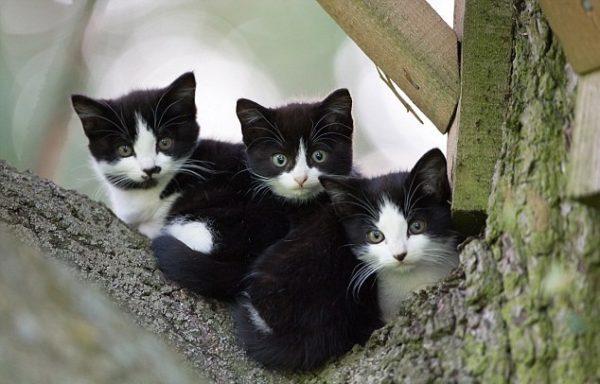 Чёрно-белые котята из одного помёта