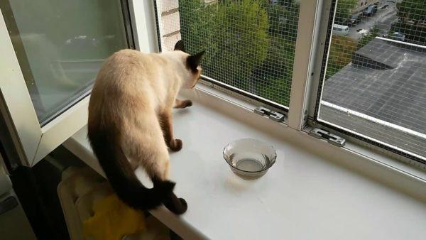 Ограничьте животному доступ к открытому окну, чтобы кошка не вдыхала уличные аллергены