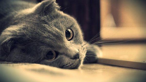 Заболевшая кошка избегает ласки, мало двигается