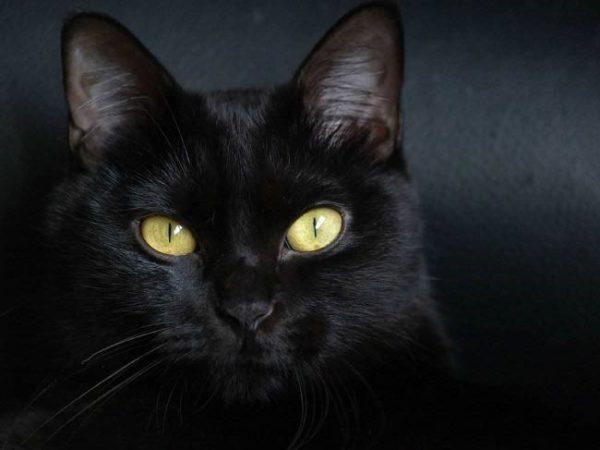 Фото кошек с зелеными глазами