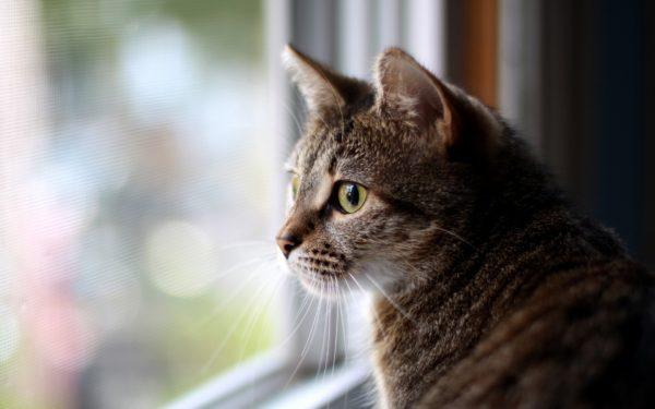 Владелец кошки должен быть бдителен и оградить её от самых очевидных опасностей