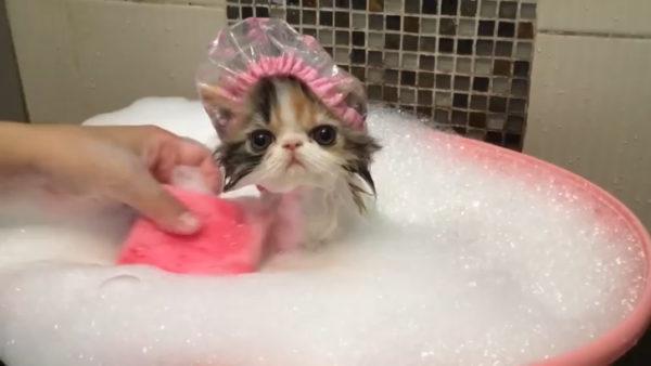 Подготовка к мытью является не менее важным этапом, чем само купание