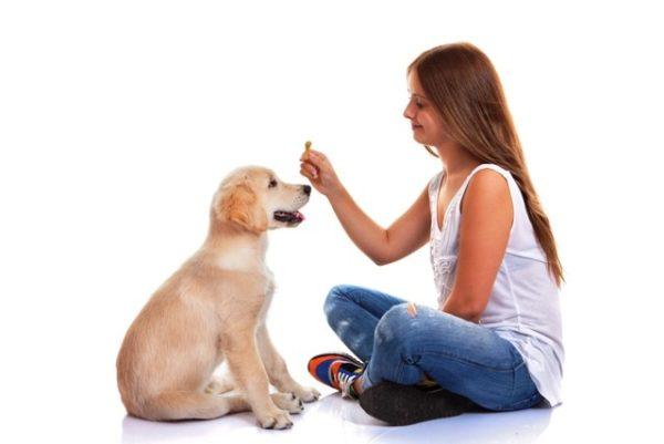 Владельцы молодых собак всегда должны носить с собой «вкусняшку» для поощрения