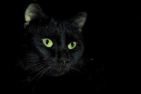 Получить насыщенные зелёные глаза у кошек непросто