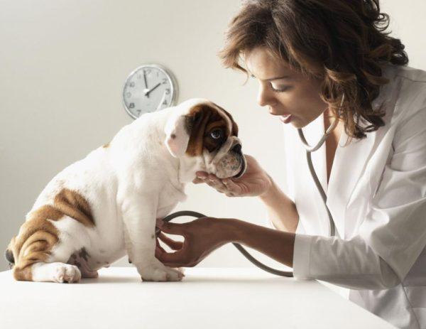 Временные рамки лечения препаратом следует обсуждать с ветеринаром