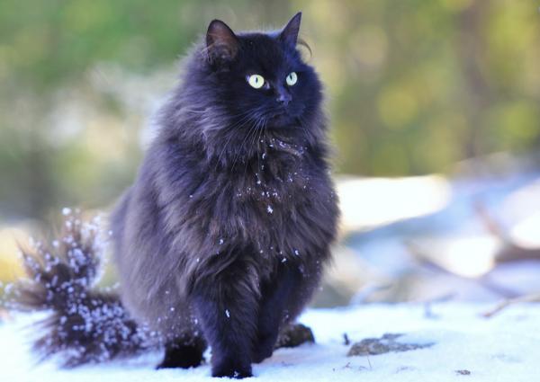 Лесная, но домашняя кошка