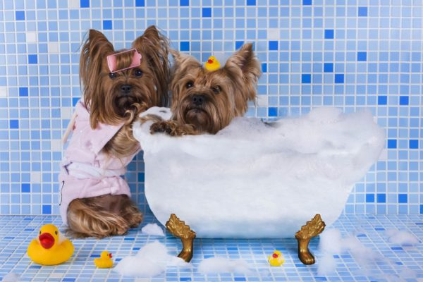 Большинство моющих, за исключением дешевых шампуней, являются безопасными
