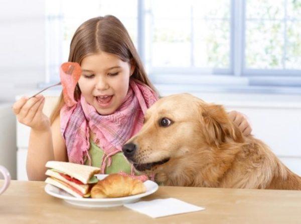 Нельзя позволят собаке класть на стол морду, тем более, лапы