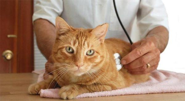 От приёма гормональных средств у животных нередко сильно портится здоровье