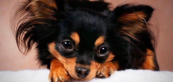 В промежутках между кормлениями нельзя баловать собаку лакомством