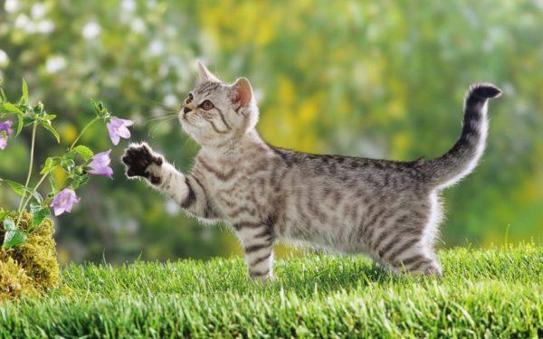 Дикие родственники домашних кошек редко страдают от авитаминоза