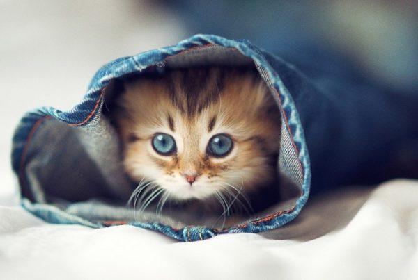 С самых первых дней котёнка в доме нужно оградить от воздействия вредных веществ (табак, химия)