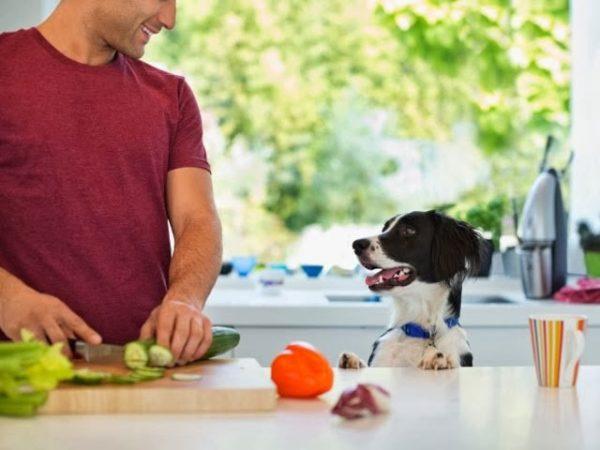 Кормящая сука должна получать витамины не только из пищи