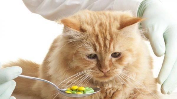 Кошкам с авитаминозом при нормальном рационе, назначают витаминные комплексы дополнительно