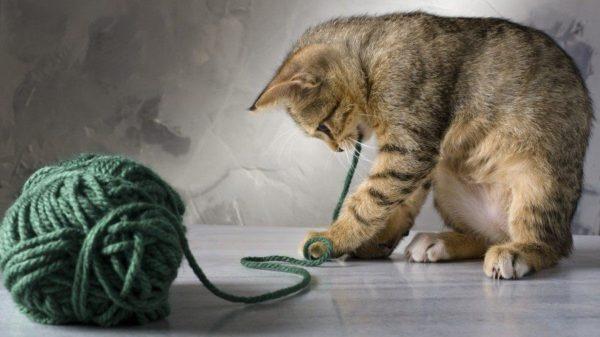 После терапии Байтрилом животные быстро возвращаются к нормальному образу жизни