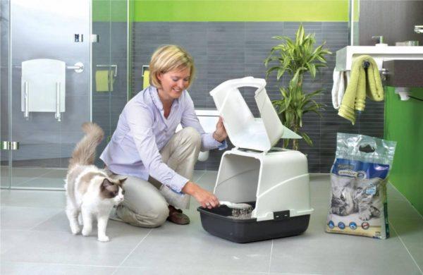 Чистый туалет – обязательный пункт содержания каждой кошки