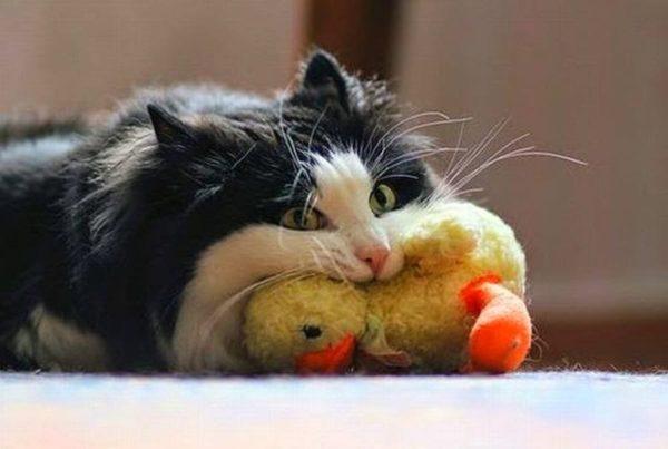 Усталость успокаивает даже самых активных кошек