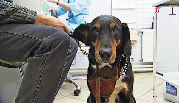 При ухудшении состояния животное нужно показать врачу