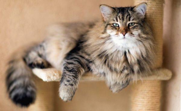 Астма у кошек: как диагностировать и лечить?