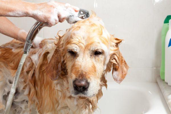 Лечебные шампуни облегчают состояние животного