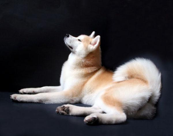 Мы можем наблюдать этих животных сейчас в том же виде, что и японцы, проживающие 4 века назад
