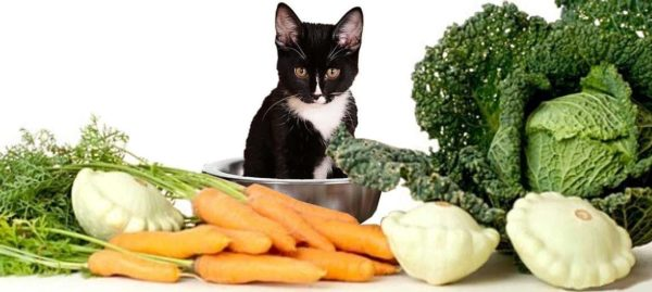 Кошки – хищники, но растительная пища им также необходима