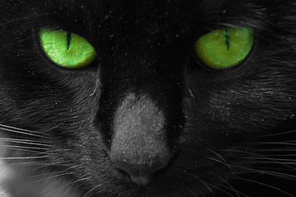 Чёрный кот с зелёными глазами