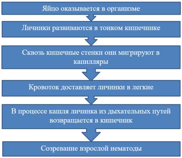 Особенности цикла