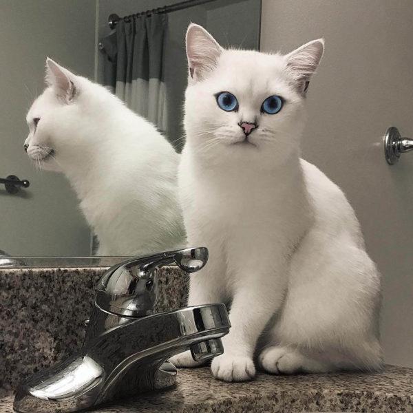 Коби - кот, который завоевал тысячи сердец своим внешним видом