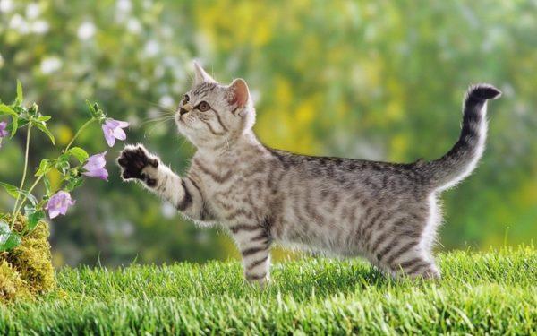 Позвольте кошке проводить больше времени на улице