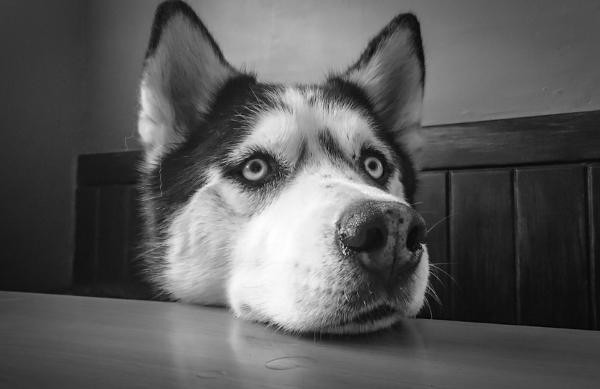 Иногда оставлять собаку под опекой родственников - не выход