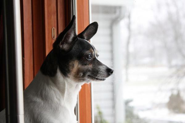 Оставлять собаку одну дома на время отпуска - это крайняя мера