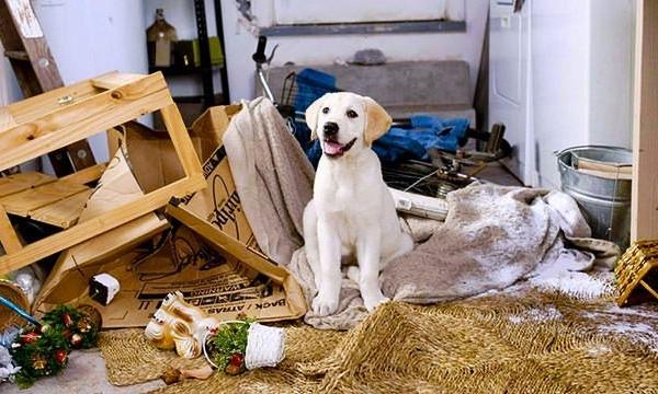 Собака, надолго запертая в одиночестве, может навести в доме свои порядки
