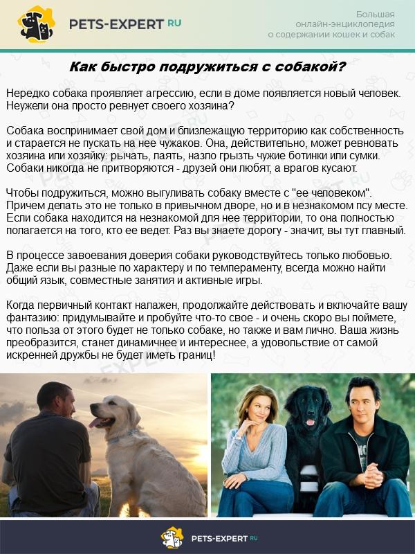 Налаженный контакт с собакой может стать началом большой дружбы
