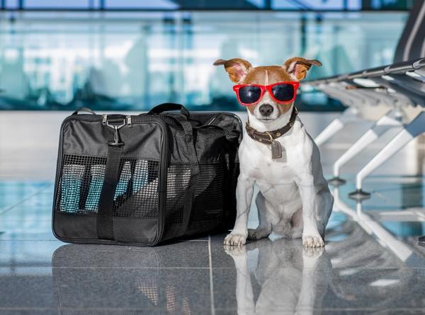 Поехать в отпуск с собакой - ответственное решение