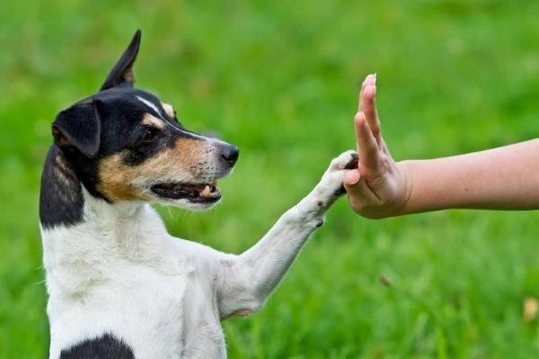 Ваши родственники и близкие могут стать друзьями и вашего питомца