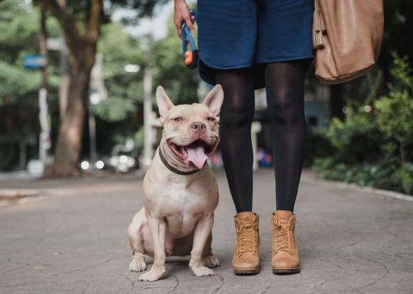 Соседство с вашей собакой может стать интересным опытом