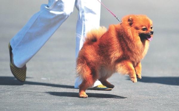 Во время отсутствия хозяина собаку нужно выгуливать в её привычном режиме