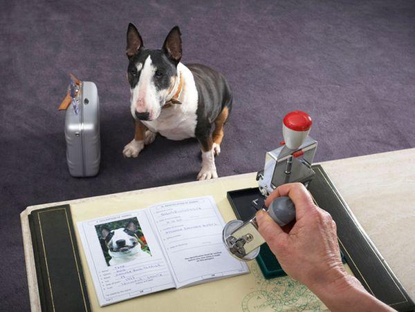 Планируя отпуск с питомцем, подготовьте его документы