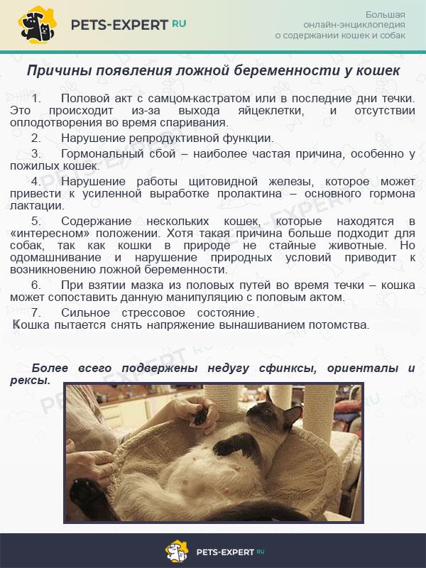 Причины появления ложной беременности у кошек