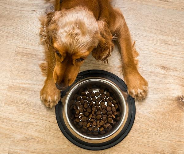 У собаки должна быть возможность питаться комфортно