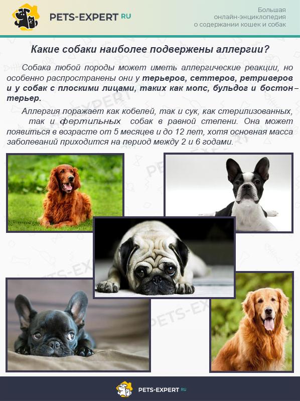 Капли для собак от аллергии thumbnail
