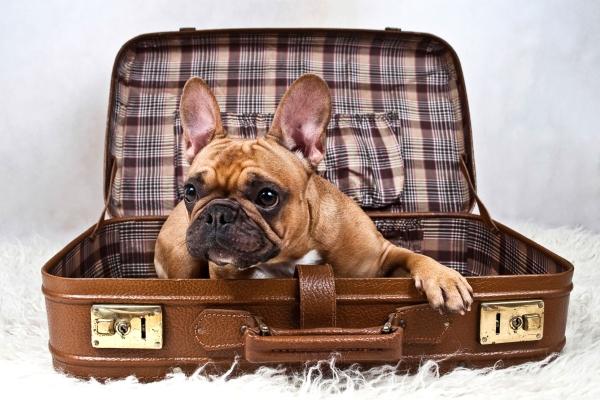 К переезду собаки следует начать готовиться заблаговременно