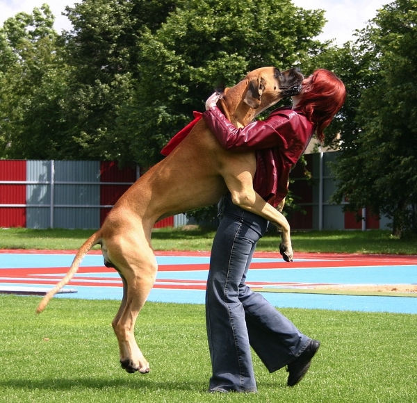Собаке нужно успеть подружиться с новым временным соседом