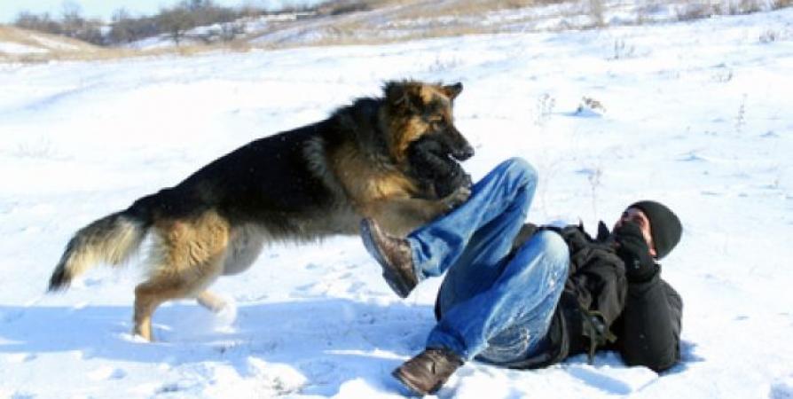 Если собака сбила вас с ног, закрывайте шею, лицо, живот и пах.