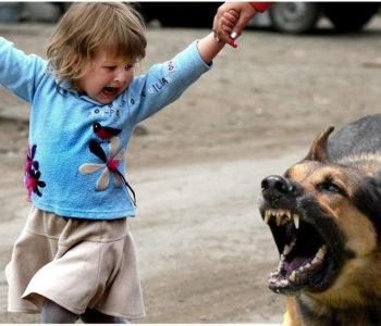 Что делать, если на вса напала собака?